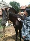 3 iulie 2011 _ http://www.laurapoanta.ro/Poze/carti/3_iulie_2011.jpg